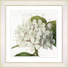 Vintage Botanical No. 47W by Zhee Singer Framed Giclee Print Fine Wall Art