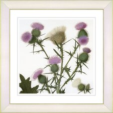 Vintage Botanical No. 38W  by Zhee Singer Framed Giclee Print Fine Wall Art
