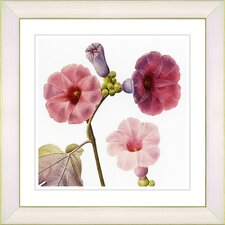 Vintage Botanical No. 17W  by Zhee Singer Framed Giclee Print Fine Wall Art