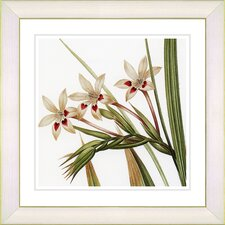 Vintage Botanical No. 43W by Zhee Singer Framed Giclee Print Fine Wall Art