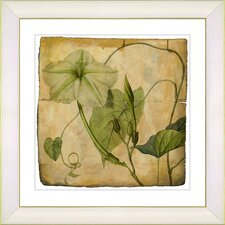 Vintage Botanical No. 29A  by Zhee Singer Framed Giclee Print Fine Wall Art