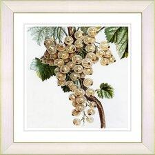 Vintage Botanical No. 09W by Zhee Singer Framed Giclee Print Fine Wall Art