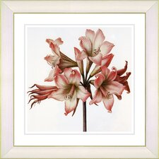 Vintage Botanical No. 33W by Zhee Singer Framed Giclee Print Fine Wall Art