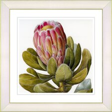 Vintage Botanical No. 57W  by Zhee Singer Framed Giclee Print Fine Wall Art