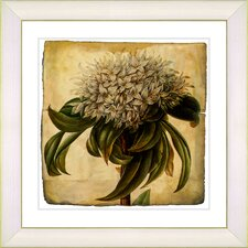 Vintage Botanical No. 37A  by Zhee Singer Framed Giclee Print Fine Wall Art