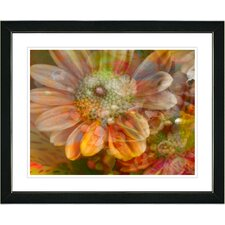 "<strong>Studio Works Modern</strong> ""Orange Glory Daisy Flower"" Framed Fine Art Giclee Print"