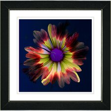 "<strong>Studio Works Modern</strong> ""Fire Flower"" Framed Fine Art Giclee Print"