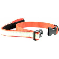 Co-Leash All-in-One Collar and Night Glow Leash