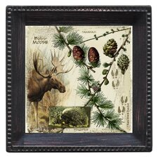 Bull Moose Ambiance Coaster Set (Set of 4)