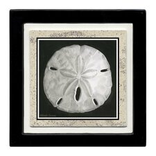 Sand Dollar Ambiance Coaster Set (Set of 4)