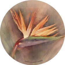 Bird of Paradise Coaster (Set of 4)