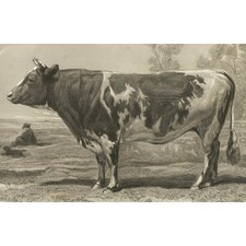 <strong>Belle Banquet</strong> Bovine Placemat (Set of 6)