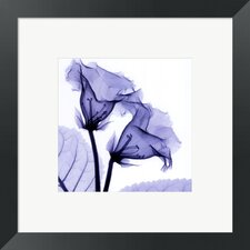<strong>Evive Designs</strong> Gloxina SM Framed Photography