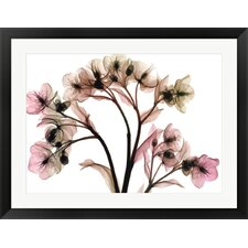 Hellebore 2 by Steven N. Meyers Framed Graphic Art