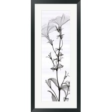 Tall Petunia by Steven N. Meyers Framed Photographic Print