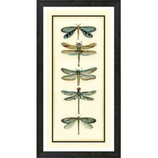 Dragonfly Collector I by Chariklia Zarris Framed Painting Print