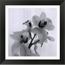 Orchid Spray II by Tom Artin Framed Photographic Print