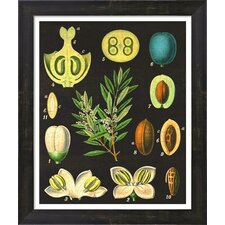 Vintage Olives Framed Art