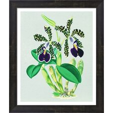 Vintage Orchids by The Evie Empire Framed Graphic Art