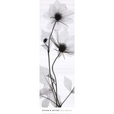 Tall Dahlia by Steven N. Meyers Photographic Print