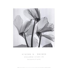 Cyclamen Study No.1 by Steven N. Meyers Photographic Print