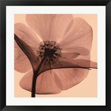 Hellebore by Steven N. Meyers Framed Graphic Art