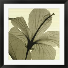 Hibiscus by Steven N. Meyers Framed Graphic Art