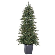 6' Natural Cut Lenox Pine Christmas Tree with 350 Clear Lights with Pot and Stand