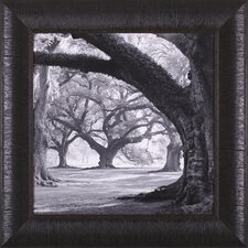 <strong>Art Effects</strong> Oak Alley, West Row Framed Artwork