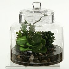 Butterfly Succulent and Easter Grass in Glass Jar