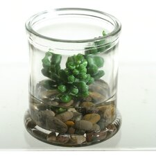 Small Donkey Tail Succulent Floor Plant in Jar