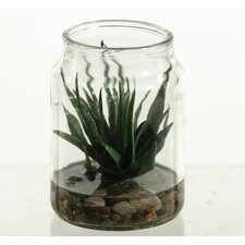 Agave Plant Floor Plant in Jar