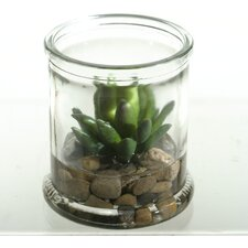 Small Agave Plant Succulent Floor Plant in Jar