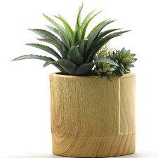 Star Succulent and Echeveria Floor Plant in Pot