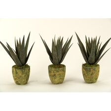 <strong>D & W Silks</strong> Agave Floor Plant in Decorative Vase (Set of 3)
