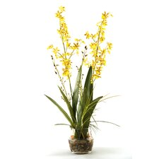 Orchids with River Grass and Orchid Greenery in Glass Dish