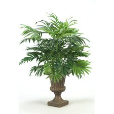 Parlor Palm Desk Top Plant in Urn