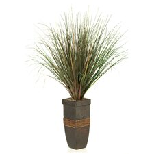 Onion Grass in Square Wooden Planter