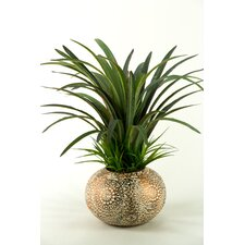 Dracaena and Wild Grass in Round Ceramic Pot