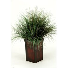 Onion Grass in Square Metal Planter