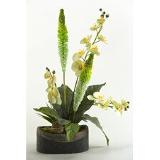 Phael Orchids, Foxtail and Foliage in Oval Stone Planter