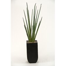 Snake Grass in Square Metal Planter