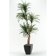 Dracaena Tree in Square Metal Planter