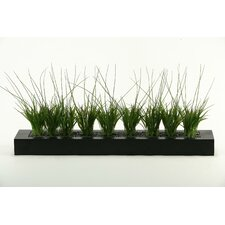Onion Grass in Rectangular Planter