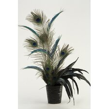 Peacock Feathers Floor Plant in Planter