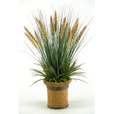 Onion Grass and Dogstail in Round Ceramic Planter