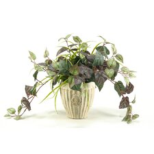Oxalis Ivy in Ceramic Vase