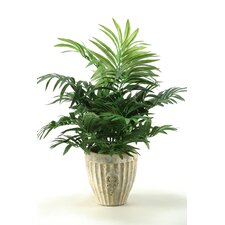 Parlor Palm in Planter