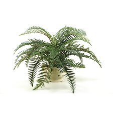 River Fern Floor Plant in Planter