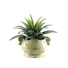 Star Plant Succulent Floor Plant in Pot
